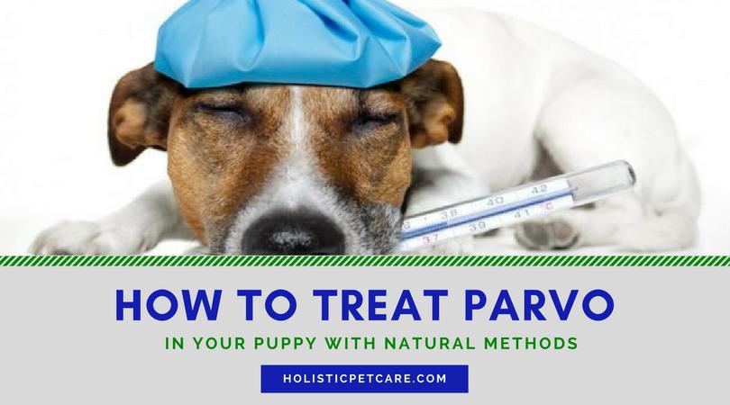 Parvovirus Treatment In Puppies Holistic Pet Care